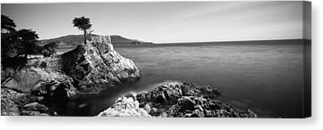 Cypress Tree At The Coast, The Lone Canvas Print by Panoramic Images