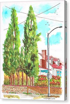 Cypresses In Massachusett Ave - Westwood - California Canvas Print by Carlos G Groppa