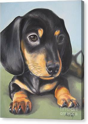 Dachshund Puppy Canvas Print by Jindra Noewi