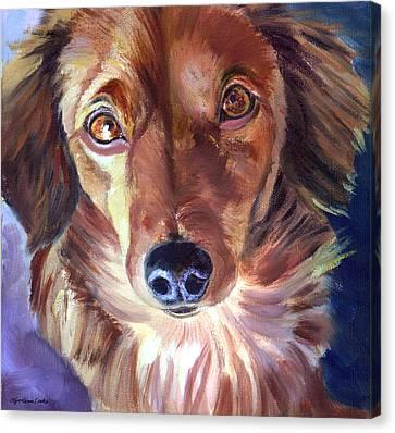 Dachshund Sparkle Eyes Canvas Print by Lyn Cook