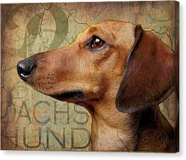 Dachshund Canvas Print by Wendy Presseisen