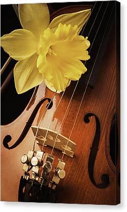 Daffodil And Violin Canvas Print by Garry Gay
