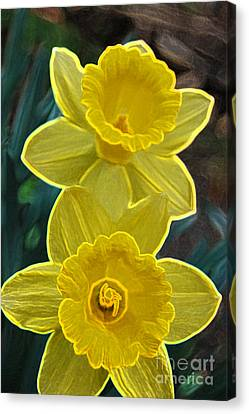 Daffodil Duet By Jrr Canvas Print by First Star Art