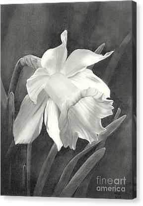 Daffodil Canvas Print by Nicola Butt