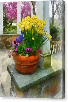 Daffodils And Pansies In Flowerpot Canvas Print by Susan Savad