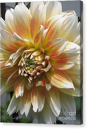Dahlia Named Peaches-n-cream Canvas Print by J McCombie