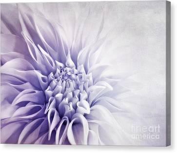 Dahlia Sun Canvas Print by Priska Wettstein