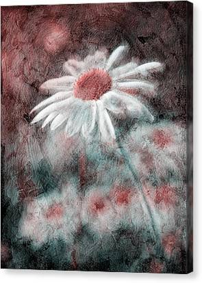 Daisies ... Again - P11ac2t1 Canvas Print by Variance Collections