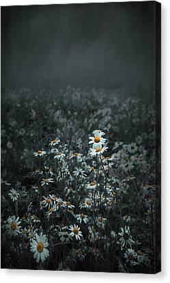 Daisies-daisies Canvas Print by Svetlana Sewell