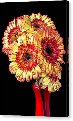Daisy Bouquet Canvas Print by Garry Gay