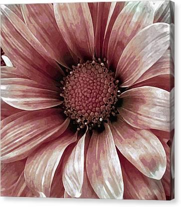 Daisy Daisy Blush Pink Canvas Print by Angelina Vick