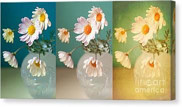 Daisy Daydreams Canvas Print by Susan Gary