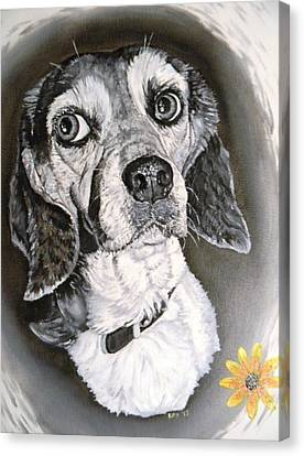 Daisy Dog Canvas Print by Kevin F Heuman