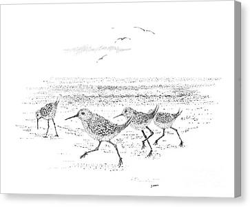 Dance Of The Sandpipers Canvas Print by Steve Knapp
