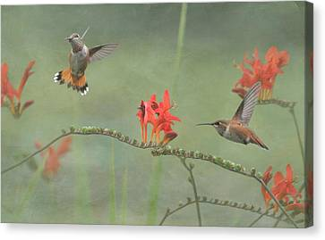 Dancing In The Flowers Canvas Print by Angie Vogel