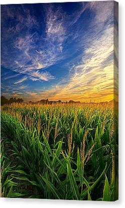 Dancing In The Rows Canvas Print by Phil Koch