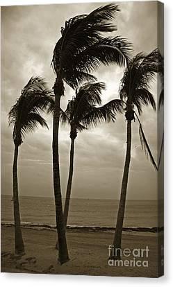 Dancing Palm Trees - Key West Casa Marina Canvas Print by John Stephens