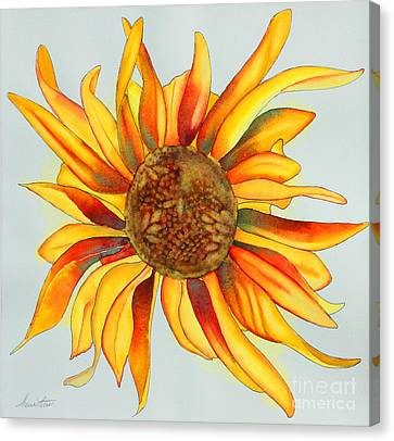Dancing Sunflower Canvas Print by Shannan Peters