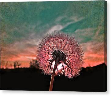 Dandelion At Sunset Canvas Print by Marianna Mills