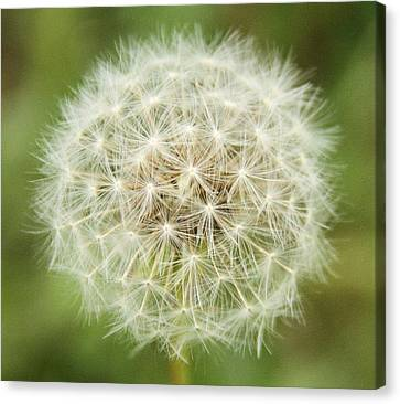 Make A Wish Canvas Print by Dan Sproul