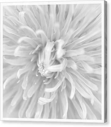 Dandelion Macro  Canvas Print by Toppart Sweden