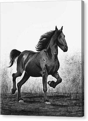 Dark Horse Canvas Print by Sesh Artwork