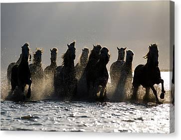 Dark Horses Canvas Print by Carol Walker