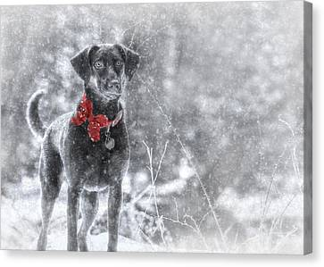 Dashing Through The Snow Canvas Print by Lori Deiter