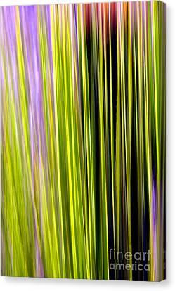 Dasylirion Velocity Canvas Print by Douglas Taylor