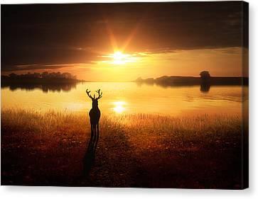 Dawn's Golden Light Canvas Print by Jennifer Woodward