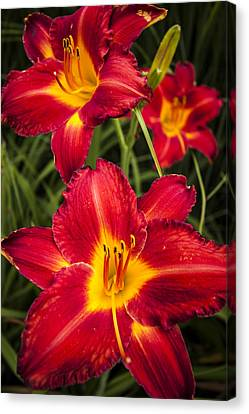 Day Lilies Canvas Print by Adam Romanowicz