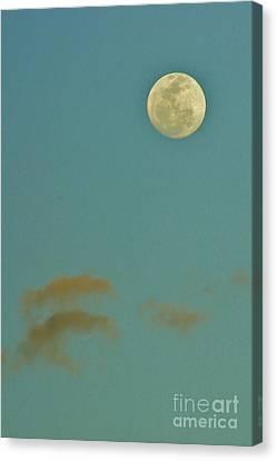 Day Moon Canvas Print by Lynda Dawson-Youngclaus