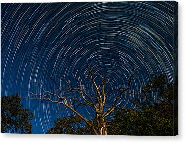 Dead Oak With Star Trails Canvas Print by Paul Freidlund