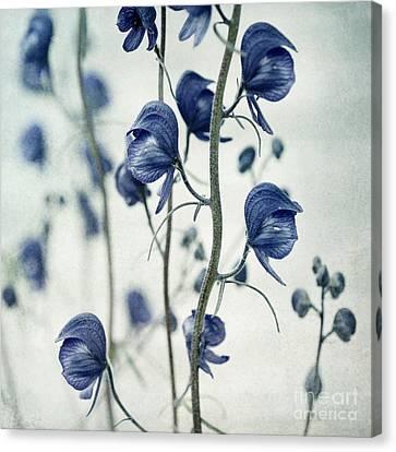 Deadly Beauty Canvas Print by Priska Wettstein