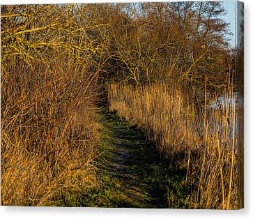 december light - Leif Sohlman Canvas Print by Leif Sohlman