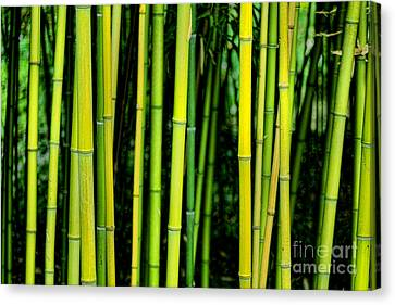 Deep Bamboo Canvas Print by Olivier Le Queinec