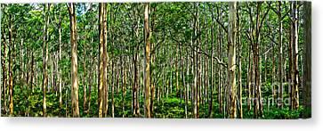 Deep Forest Canvas Print by Az Jackson