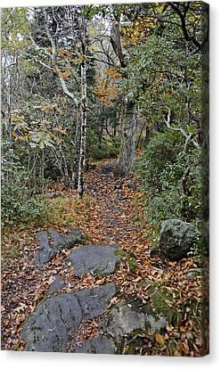 Deep In The Woods Canvas Print by Susan Leggett