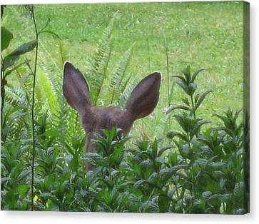 Deer Ear In A Mint Patch Canvas Print by Kym Backland