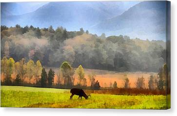 Deer In Cades Cove Smoky Mountains National Park Canvas Print by Dan Sproul