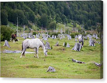 Deforestation In The Martial Mountains Canvas Print by Ashley Cooper