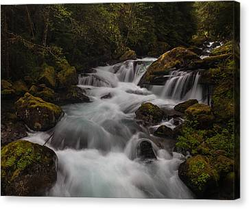 Delicate And Powerful Canvas Print by Mike Reid