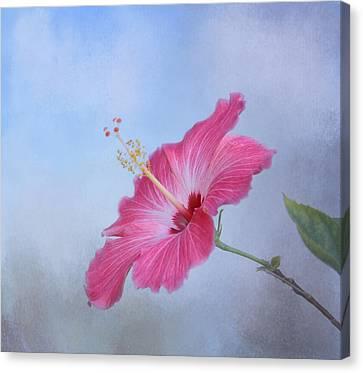 Delicate Beauty Canvas Print by Kim Hojnacki