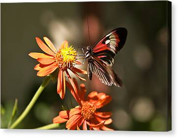 Delicate Beauty Canvas Print by Michael Rucci