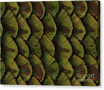 Delicate Feather Canvas Print by Bedros Awak