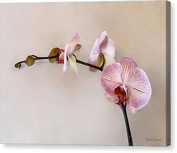 Delicate Pink Phalaenopsis Orchids Canvas Print by Susan Savad