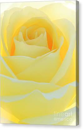Delicate Yellow Rose Canvas Print by Sabrina L Ryan