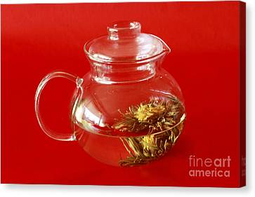 Delightful Blooming Tea Canvas Print by Inspired Nature Photography Fine Art Photography