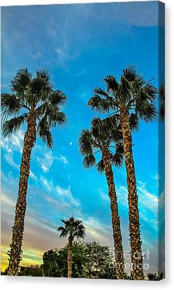 Delightful Morning Canvas Print by Robert Bales