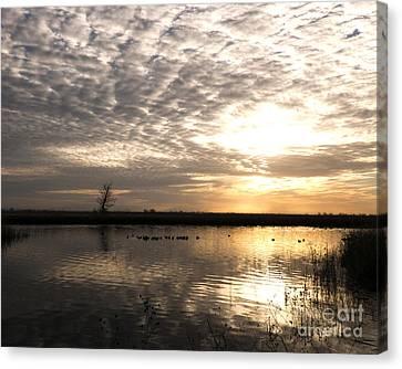 Delta Morning Canvas Print by Juan Romagosa